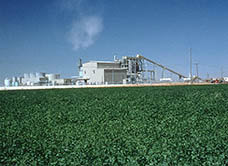 Madera Biomass Power Plant